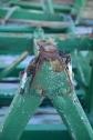 verde_ferro_geometrie